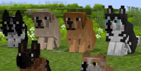 Better Dogs — милые собаки [1.16.3] [1.15.2] [1.14.4] (16x)