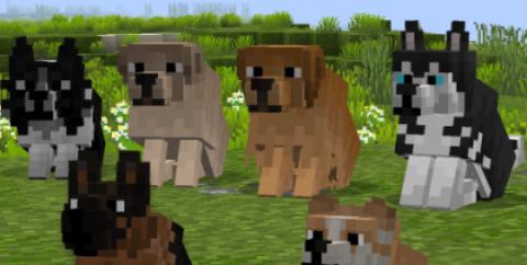 Better Dogs — милые собаки [1.16.5] [1.15.2] [1.14.4] (16x)